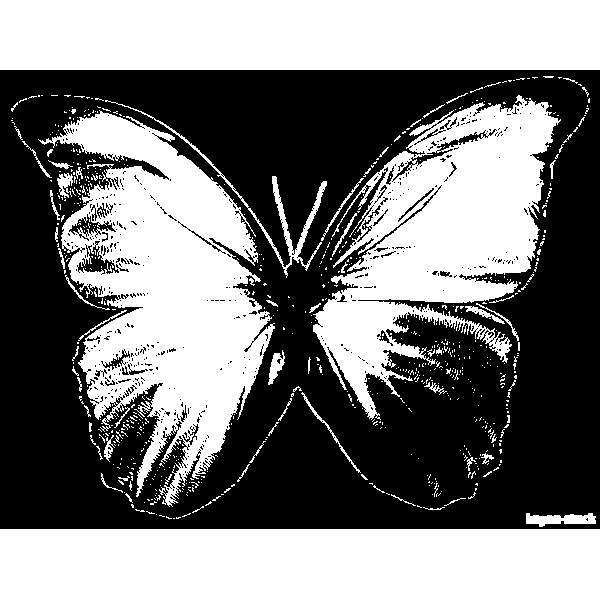 tampon Papillon n°3