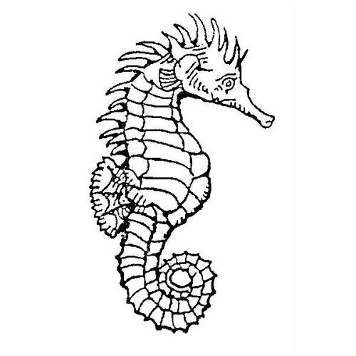 tampon Hippocampe