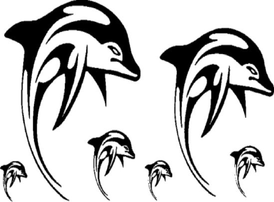 Tampons tatouages éphémères Dauphins
