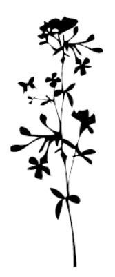 tampon Fleurs des champs