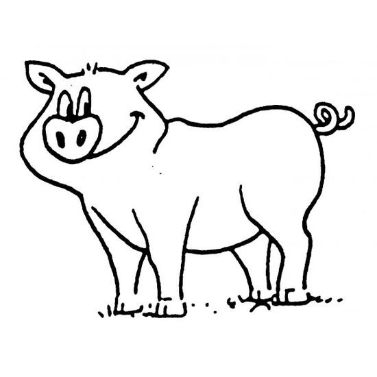 tampon Cochon