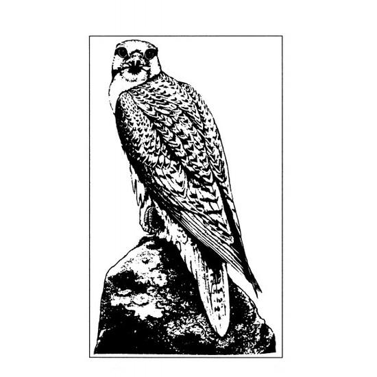 tampon Gravure ancienne : aigle