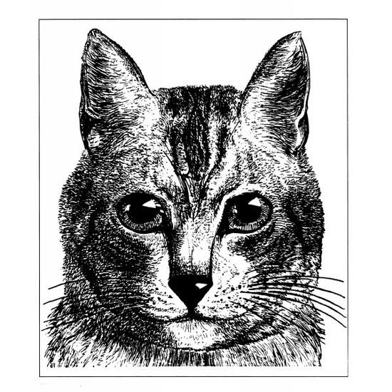 Tampon en bois Gravure ancienne : chat