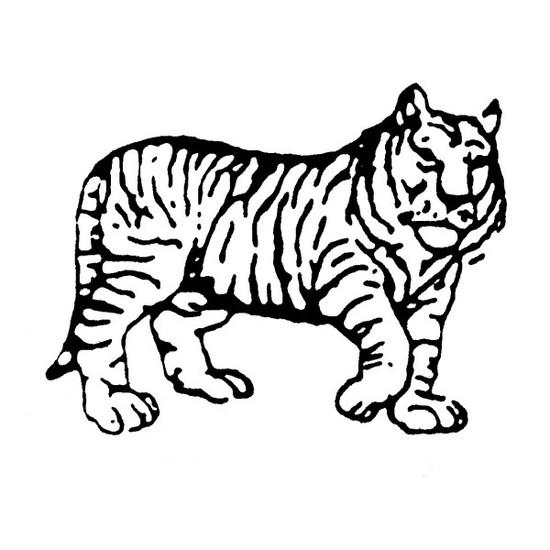 tampon Tigre